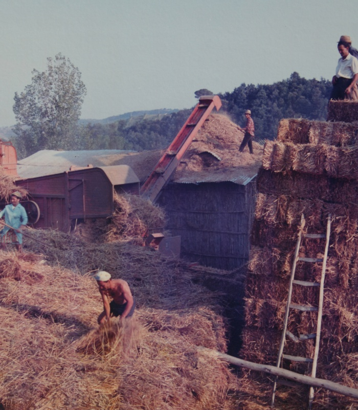 25th july 1971: harvest time for the family of Casale Monticchio