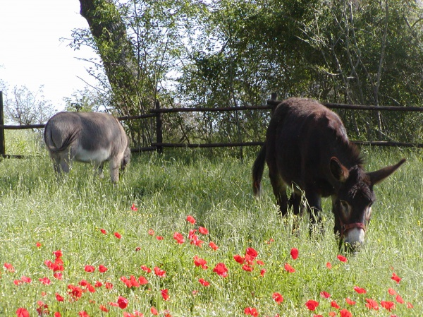 Donkeys in the meadows
